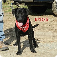Adopt A Pet :: Ryder - Lawrenceburg, TN