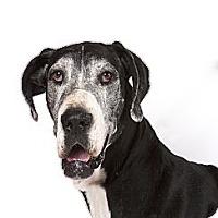 Adopt A Pet :: Martha - Mesa, AZ