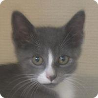 Adopt A Pet :: WOLF - Hamilton, NJ