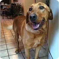 Adopt A Pet :: Max - Foster, RI