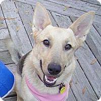 Adopt A Pet :: Jazz - Kingwood, TX