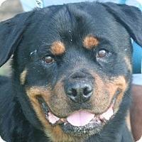 Adopt A Pet :: Hank - Alachua, GA