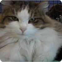 Adopt A Pet :: Suzanna - Riverside, RI