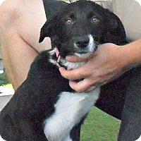 Adopt A Pet :: Carla - white settlment, TX