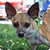 Adopt A Pet :: Lizzy Lou Bonte' - Woodland, CA