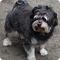 Adopt A Pet :: Teddy - Grafton, MA