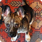 Adopt A Pet :: Sorrin!