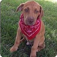 Adopt A Pet :: Sebastian - Normandy, TN