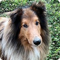 Adopt A Pet :: Lad & Sandi (discounted) - Allentown, PA