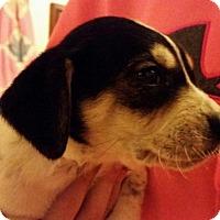 Adopt A Pet :: Watson - Manhattan, NY