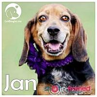 Adopt A Pet :: Jan - Pittsburgh, PA