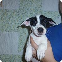 Adopt A Pet :: Razzle - Oviedo, FL