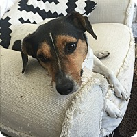 Adopt A Pet :: Billy in Austin - Austin, TX
