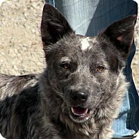 Adopt A Pet :: Sterling - Texico, IL