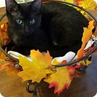 Adopt A Pet :: Maxwell - Millersville, MD