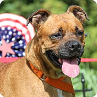 Adopt A Pet :: Sandy (Spayed) - Marietta, OH