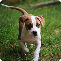 Adopt A Pet :: Frasier - Richmond, VA