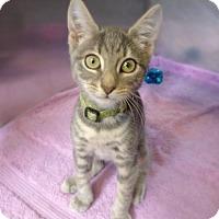 Adopt A Pet :: Pickles 31745875 - Westampton, NJ