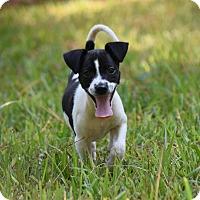 Adopt A Pet :: Burt - Groton, MA