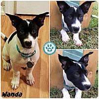 Adopt A Pet :: Wanda - Kimberton, PA