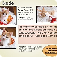 Adopt A Pet :: Blade - Mount Gilead, OH