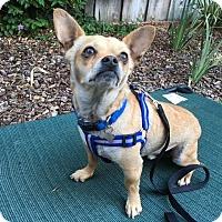 Adopt A Pet :: Ricky - Santa Clara, CA