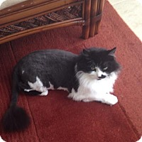 Adopt A Pet :: Rapunzel Courtesy Post - Absecon, NJ