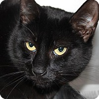 Adopt A Pet :: SUZY - Clayton, NJ