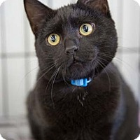 Adopt A Pet :: Rocky Road - Merrifield, VA
