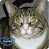 Adopt A Pet :: Lucky - Huntington, NY