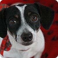 Adopt A Pet :: Josie - san diego, CA