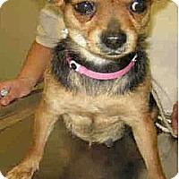 Adopt A Pet :: Zelda - Long Beach, CA