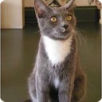 Adopt A Pet :: Diesel - Monroe, GA
