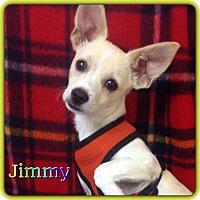 Adopt A Pet :: Jimmy - Hollywood, FL