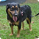 Adopt A Pet :: Willa