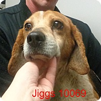 Adopt A Pet :: Jiggs - baltimore, MD