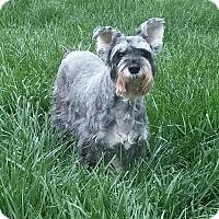 Adopt A Pet :: Angel-News! - Laurel, MD