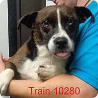 Adopt A Pet :: Train - baltimore, MD