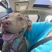 Adopt A Pet :: Christian - Villa Park, IL