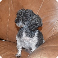 Adopt A Pet :: Sophia - Prole, IA