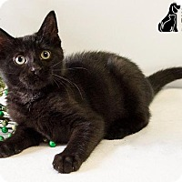 Adopt A Pet :: HICCUP - Sandusky, OH