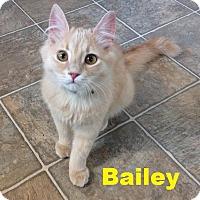 Adopt A Pet :: Bailey - Beautiful Boy! - Huntsville, ON