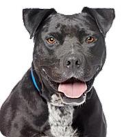 Adopt A Pet :: Cuervo - Los Angeles, CA