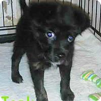 Adopt A Pet :: Tonk - House Springs, MO