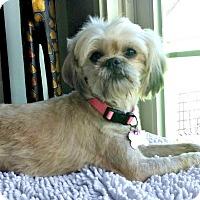 Adopt A Pet :: Ginger is very sweet! - Redondo Beach, CA