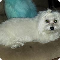 Adopt A Pet :: Baby - Las Vegas, NV