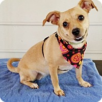 Adopt A Pet :: Tinkerbell - Lawrenceville, GA