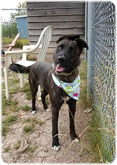 Dutch Shepherd Mix Dog for adoption in Welland, Ontario - Ella
