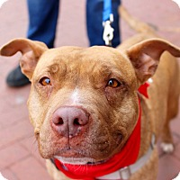 Adopt A Pet :: Lola - Washington, DC
