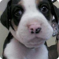 Adopt A Pet :: Tucker - North Ridgeville, OH